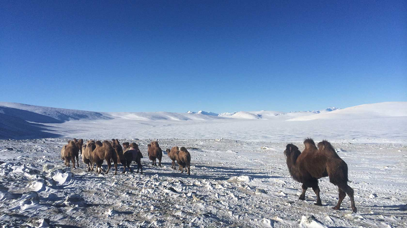 MEET THE UNEXPECTED IN MONGOLIA