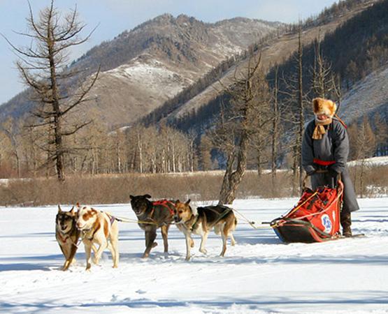 Dog Sledding in Mongolia